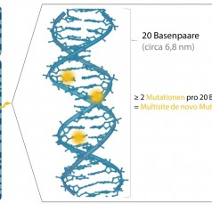 The Graph Illustrates How Radiation Alters the Genome